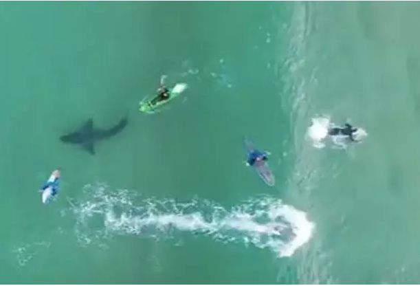 Images of the moment! They went out to sea without knowing that a big killer shark was swimming under them and everything was filmed! It's amazing what happened next